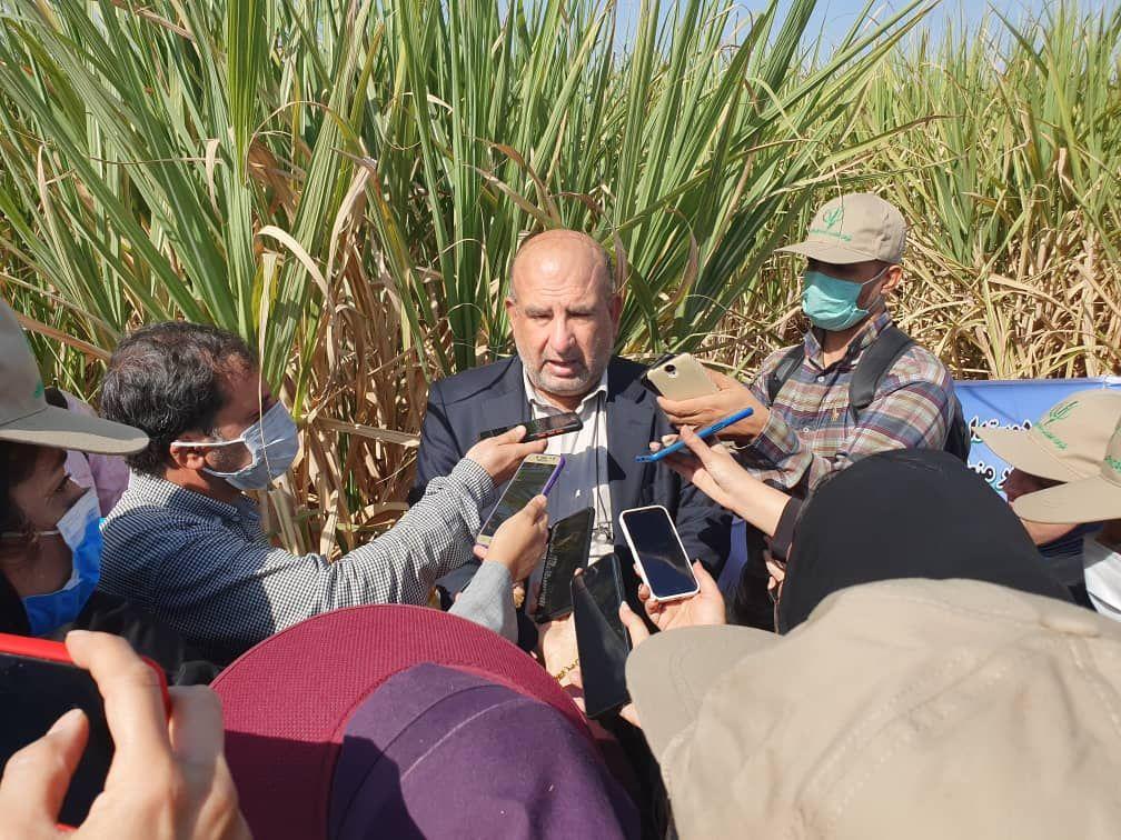 شروع برداشت نیشکر در مجتمعهای هفتگانه خوزستان